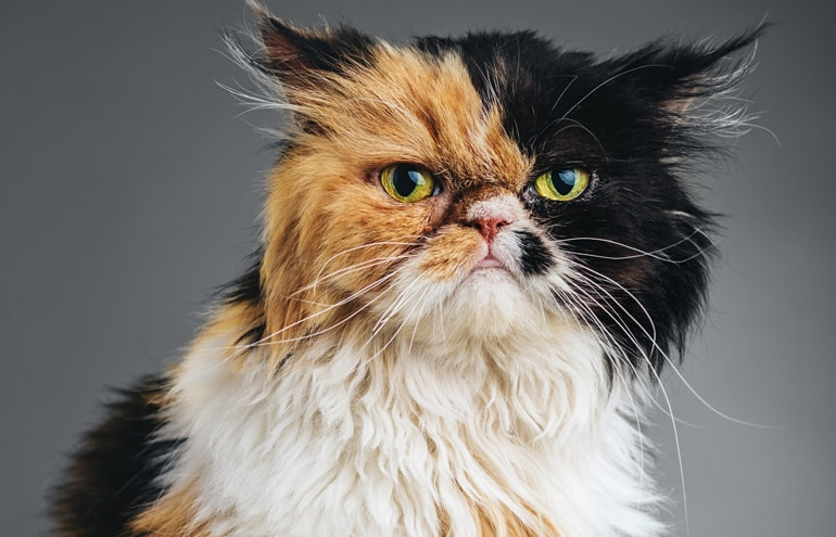 Cats Resting Bitch Face